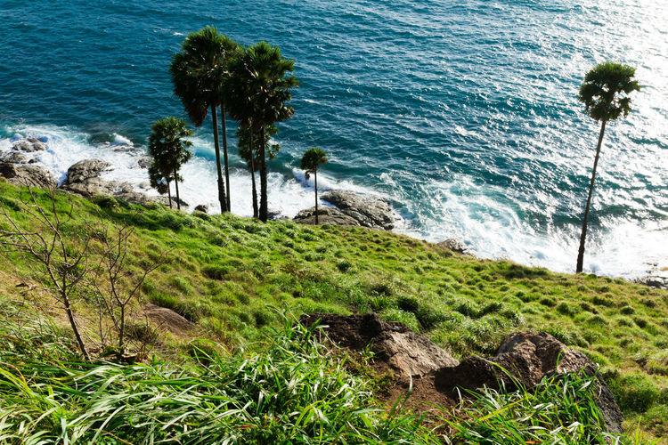 Plant Water Sea