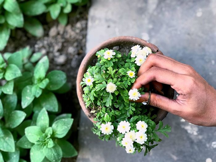 Flowers and nature Nature Flower Hand Holding Green Color Nature Real People High Angle View Leaf Day Freshness Plant Part Potted Plant Lifestyles Unrecognizable Person Beauty In Nature Close-up