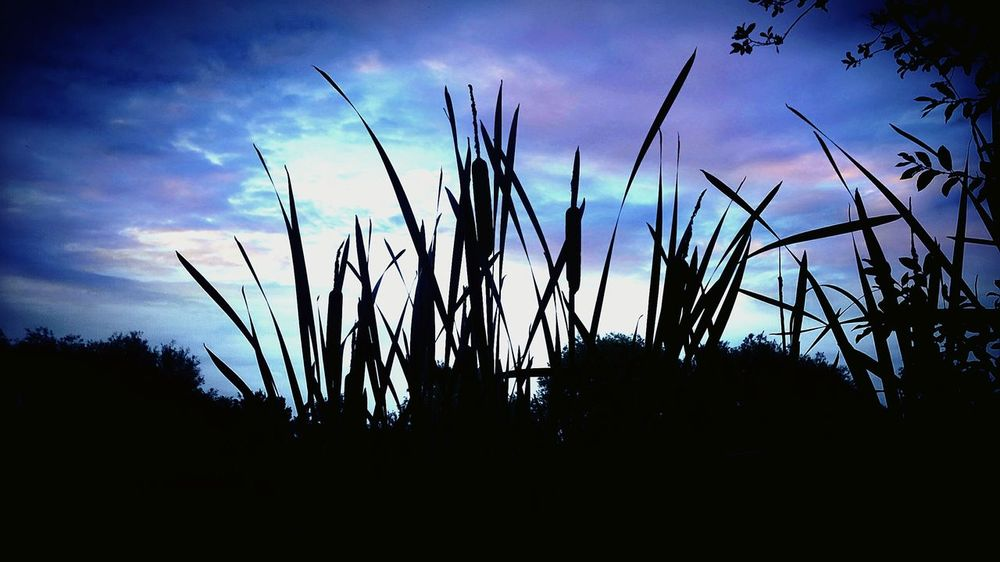 Water Reeds Dusk In The Country EyeEm Nature Lover Eyemskylovers Blue Sky Dusky Down By The River Vignette