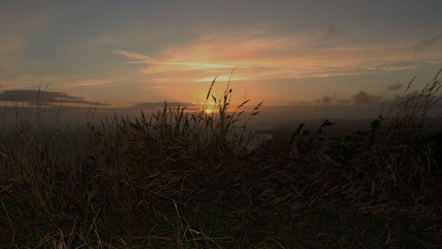 Grass Horizon