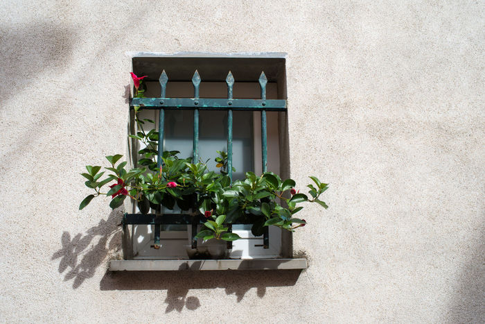 Shadows & Lights Wall Architecture Built Structure Day Flower Growth Nature No People Outdoors Plant Plaster Sunlight Whitewashed Window Window Box