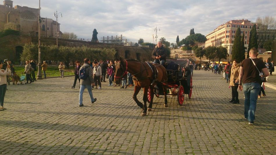 Animal City Cloud Horse Horseback Riding Itary Rome Rome, Italy Sky Street Travel Destinations Walking