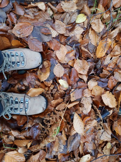 Low section of person standing on fallen leaves