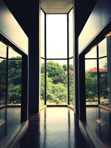 Window Indoors  Flooring Architecture No People Day Built Structure Open Home Interior Tree Architectural Column Nature Sky Light And Shadow Light Windows Reflection Reflections Minneapolis Institute Of Art Mia Summer Tree Nature Architecture The Week On EyeEm