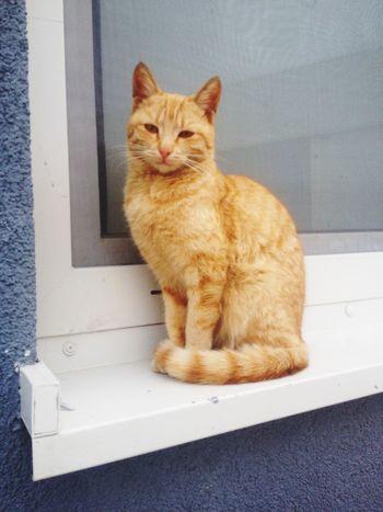 Cat Animals Windowframe Outsite Cuties EyeEm Best Shots