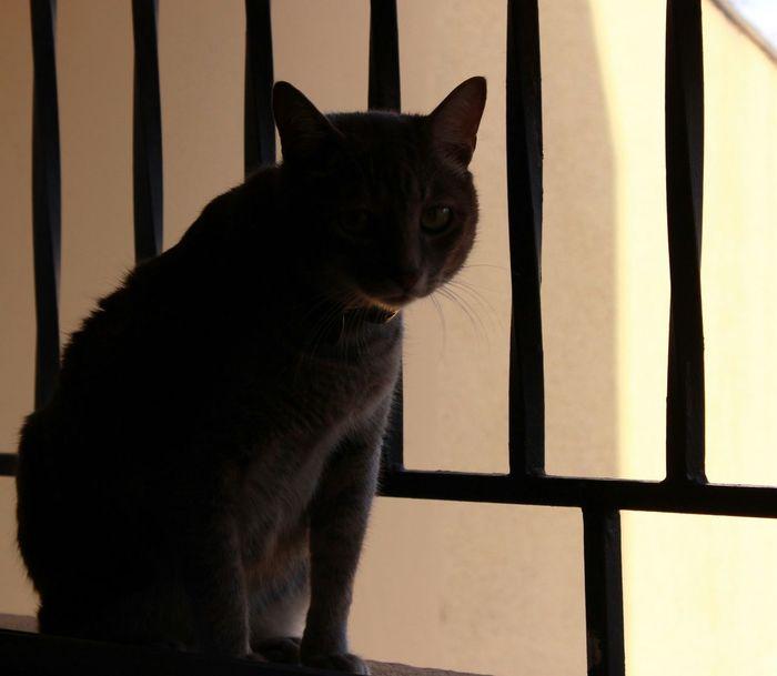 Sunny Silhouette Cat Pets