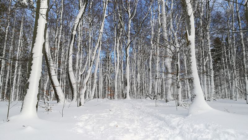Winter Snow Cold Temperature Nature Frozen Outdoors No People Day Beauty In Nature Tree Freshness Shades Of Winter