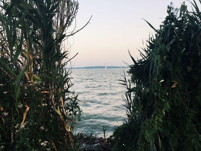 Lake Balaton Lake Sky Water Plant Sea Tree Nature Tranquility