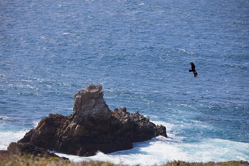 A sunny day in Big Sur, California Walkerpixels Birdwatching Birds_collection Birds Of EyeEm  Pacific Coast Highway Pacific Ocean Bird Photography Bird Big Sur, California Big Sur CALIFORNIA Big Sur Carmel Carmel-by-the-sea Carmel California Sea Nature Rock - Object Water Rock Formation Beauty In Nature Wave Day Extreme Sports High Angle View Cliff Tranquility Adventure Outdoors Scenics Bird