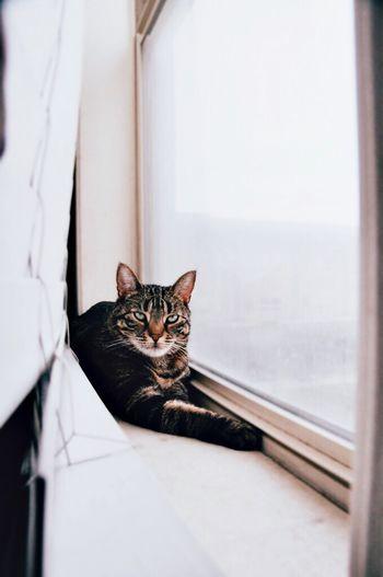 Pets Domestic Cat Domestic Animals Feline One Animal Cat Window Window Cat Indoors  Cats Cat♡ Cat Lovers Cats Of EyeEm