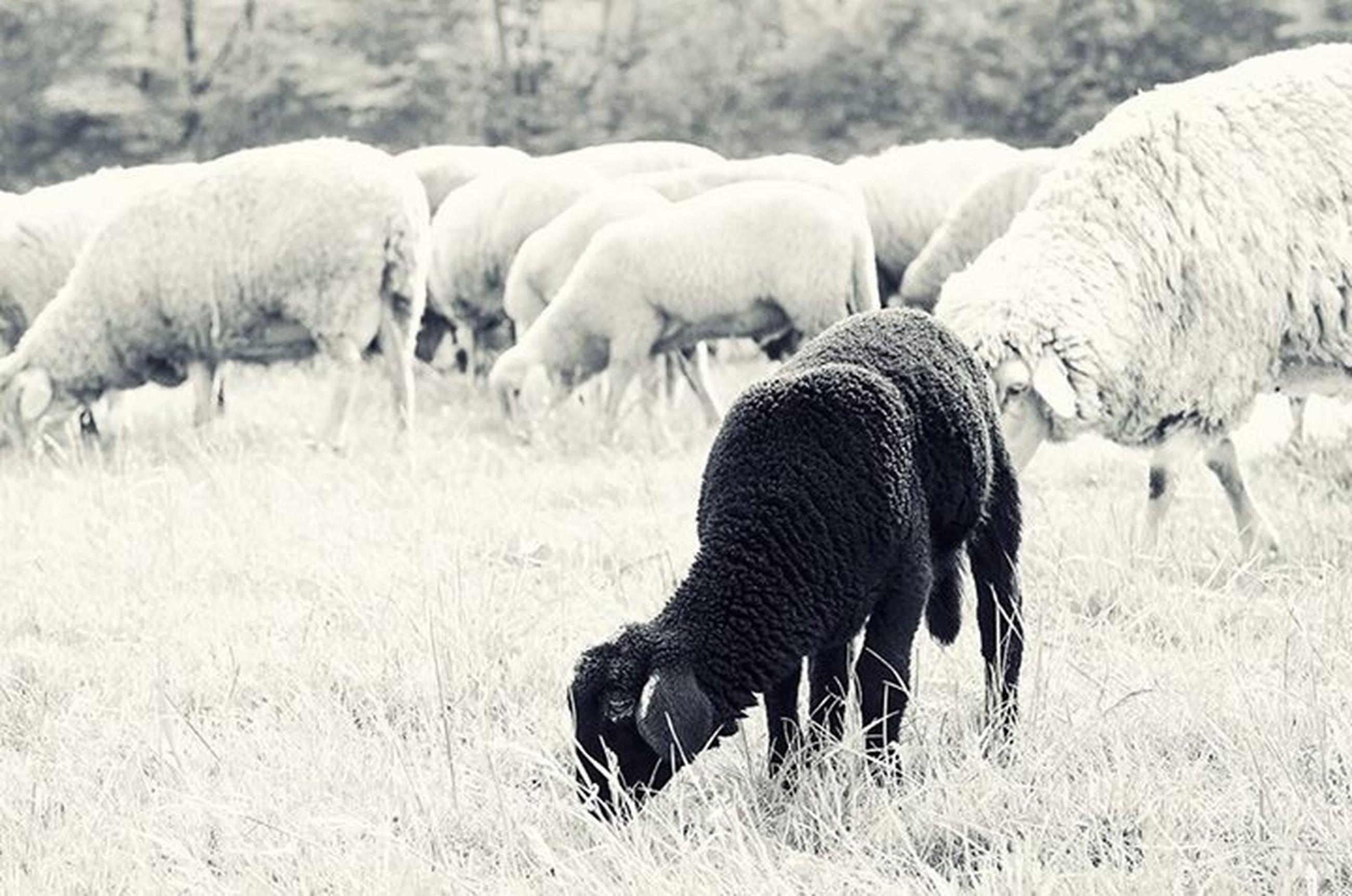 animal themes, field, mammal, livestock, safari animals, herbivorous, grazing, standing, domestic animals, two animals, nature, herd, animals in the wild, wildlife, landscape, zebra, elephant, grass, animal family
