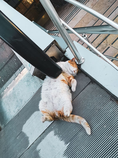 High angle view of cat sleeping on the floor in a metrobus station