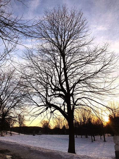 Winter Snow Cold Temperature Bare Tree Nature Tree Sky Beauty In Nature Weather Scenics Tranquility Outdoors Landscape Tranquil Scene Branch No People Sunset Day