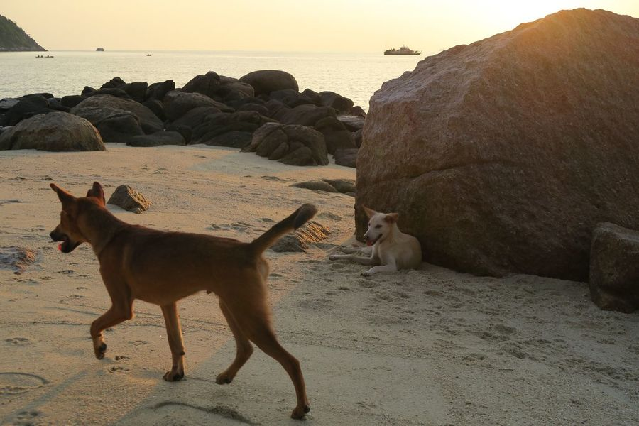 Sea Animal Themes Rock - Object Sand Beach Nature Rock Formation Mammal Water Domestic Animals No People Dog EyEmNewHere Standing Beauty In Nature Outdoors Day Sky Full Length