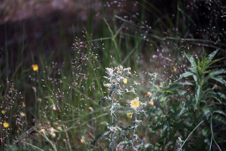 Magie 💫 Nature Flower Plant Growth No People (null)Outdoors Beauty In Nature Fragility Freshness Grass Close-up Finesse Légèreté Fleurs Fleurs Du Jardin Fleurs Sauvages