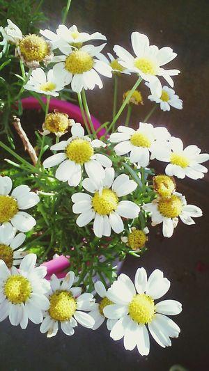 Flowers Flower Flowers,Plants & Garden First Eyeem Photo