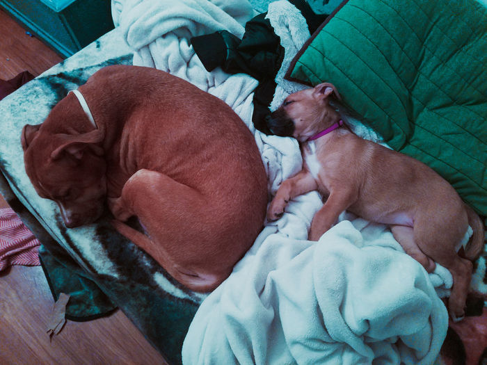 High angle view of puppy sleeping on blanket