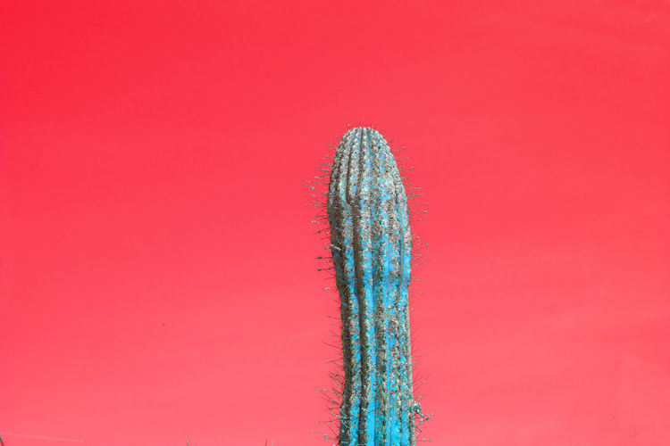 Close-up of cactus plants against red background