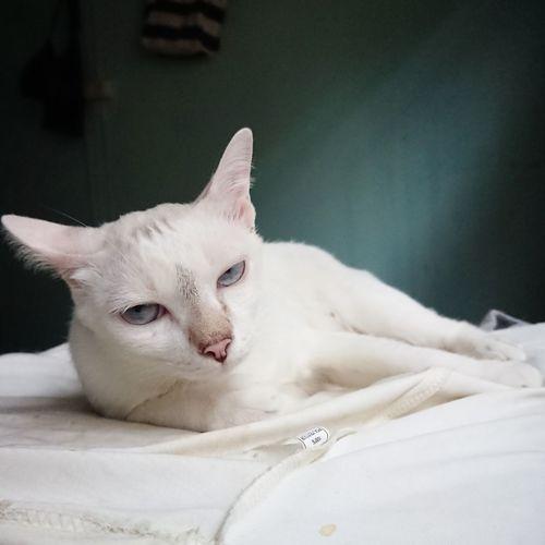Cats Cat Mycat