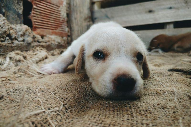 Portrait of puppy sleeping on burlap