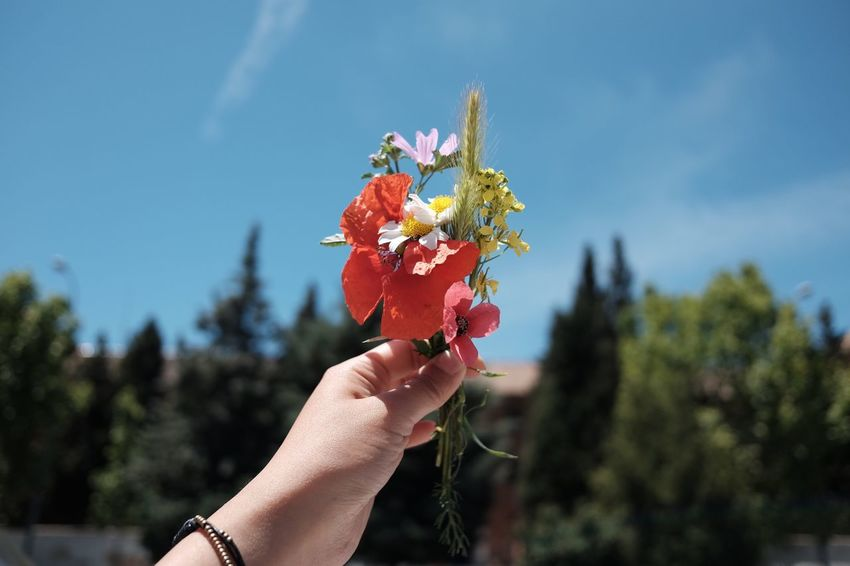 Human Hand Human Body Part Human Finger Flower Flowers Flower And Sky Red Flower Red Rojo España SPAIN Travel Trip Europe Trip Sevilla Woman Hand Woman And Flower