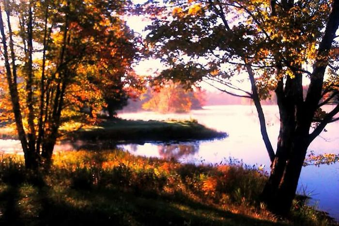 Waterfront Leaf Tree Fall Morning Sunshine ☀ Outdoors Beauty In Nature Fall Beauty Fall Colors Great View Camping The Great Outdoors With Adobe