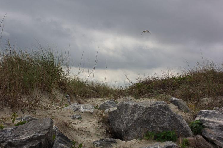 Rock & dunes Animal Wildlife Animals In The Wild Beach Beauty In Nature Bird Cloud - Sky Dune Dune Grass Dunes Florida Nature Flying Jetty Park Nature No People One Animal Outdoors Rocks Sand