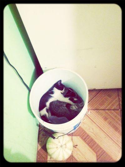 Cats Jaltipan Cute