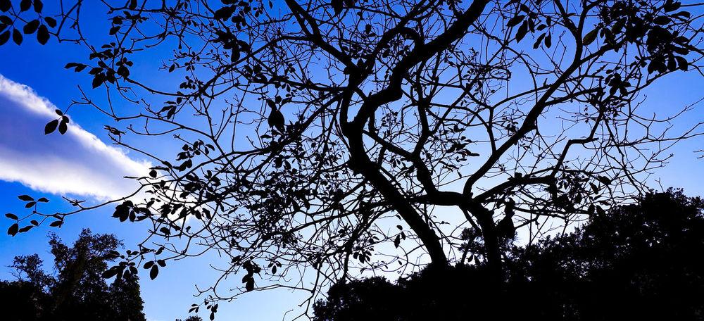 por trás da escuridão.... Rio De Janeiro Sol J7primephotography Brazil EyeEmNewHere Céu Tree Branch Bird Silhouette Sky Animal Themes Blooming Pollen Plant Life