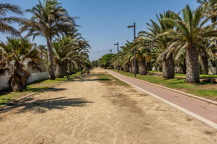 Tree Plant Palm Tree Tropical Climate Sky Growth The Way Forward Direction Clear Sky Day No People Road Footpath Beauty In Nature Land Tranquility Scenics - Nature Sunlight Diminishing Perspective Outdoors Treelined Tropical Tree Coconut Palm Tree Almería SPAIN