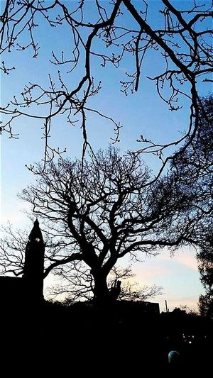 Morning Glory Silouette Church Trees And Sky Dawn Skyline Morning Sun Branches