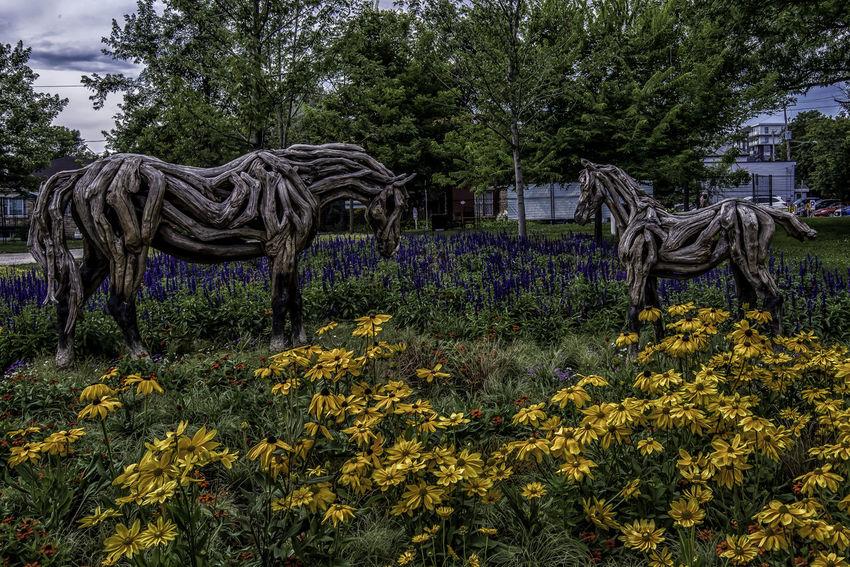 Canada150 Gatineau Ontario Ottawa Quebec Canada Driftwood Flowers Horse Mosiac
