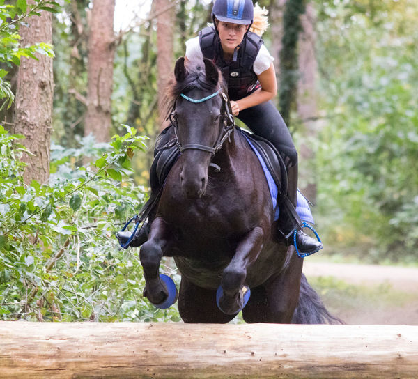 Woman Riding Horse Jumping Over Obstacle At Forest