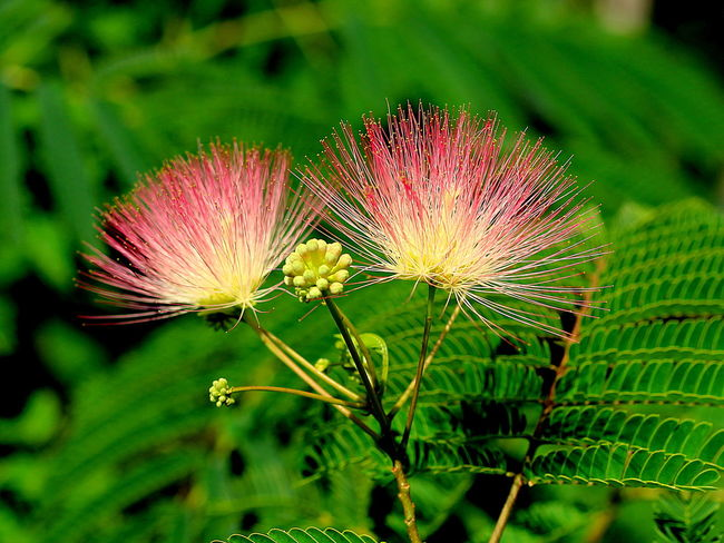 Beauty In Nature Blooming Close-up Flower Flower Head Green Green Color In Bloom Natural Pattern Nature Outdoors Pink Color Plant Tree Blooms