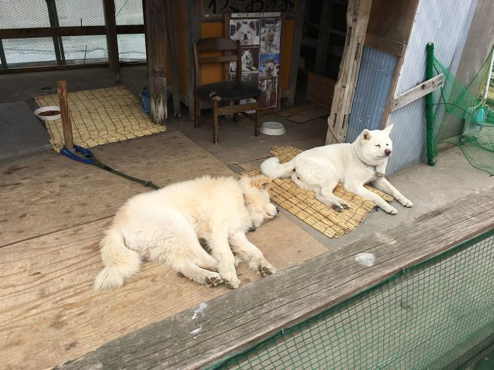 Pets Mammal Animal Themes Domestic Cat Domestic Animals Feline Day Wood - Material Architecture No People Built Structure Relaxation Outdoors Full Length Building Exterior Fish-eye Lens IPhone IPhoneography テレビで人気の犬らしい。わさお、だったかな