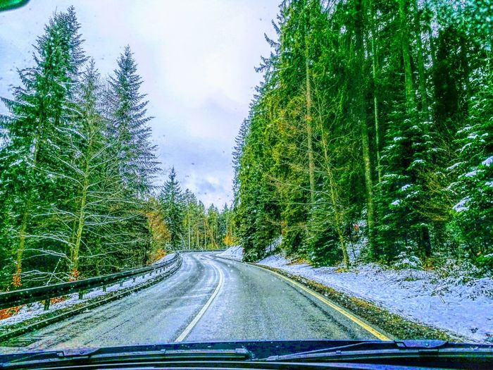 Tree Road Car Point Of View Land Vehicle Car Interior Car Windshield Sky Empty Road