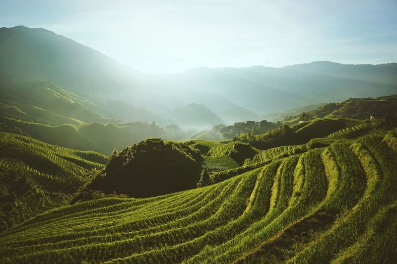 Longji Rice Terrace Landscape Green Rice Terraces China Guilin Outdoors Colour Of Life Travel