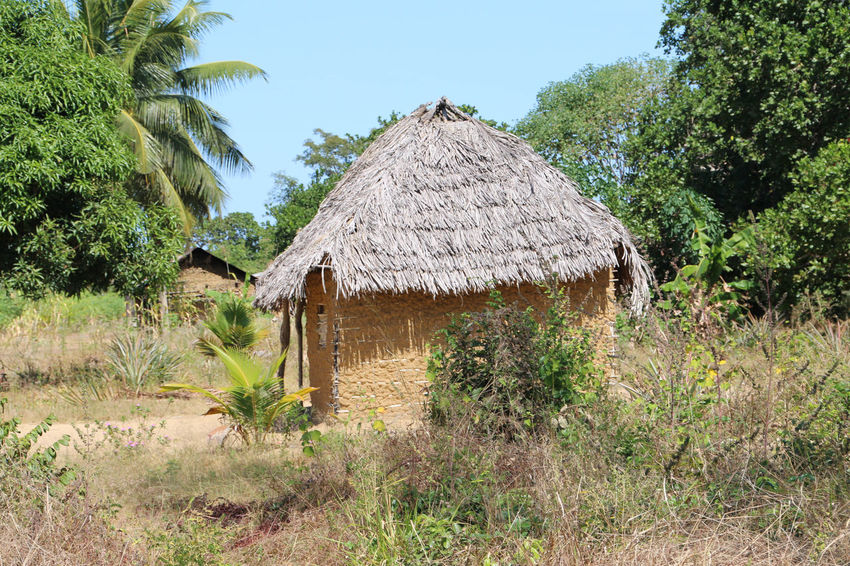 Mud hut in rural areas Architecture Beauty In Nature Building Exterior Built Structure Clear Sky Day Green Color House Hut Nature No People Outdoors Plant Roof Sky Thatched Roof Tree