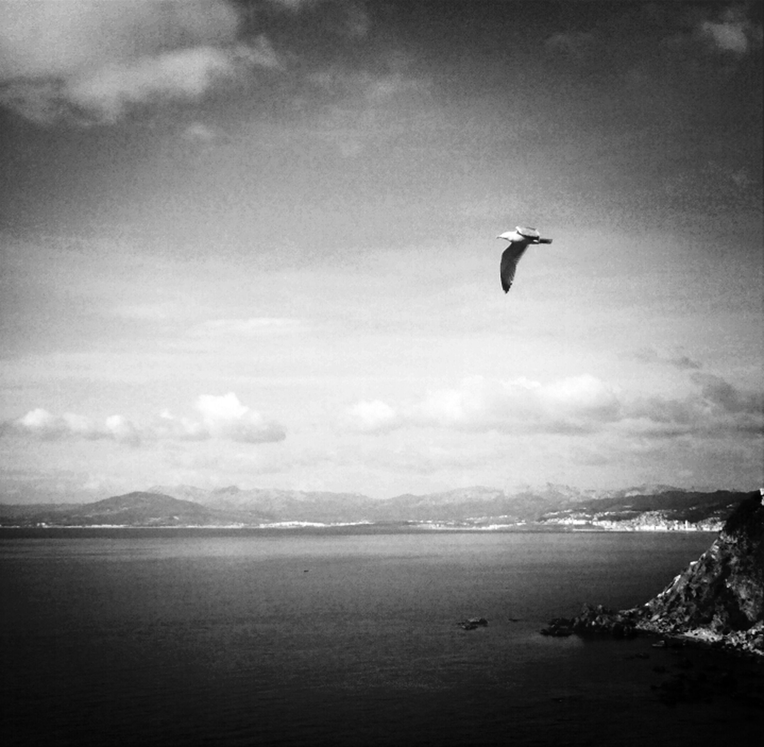 bird, flying, water, animal themes, animals in the wild, wildlife, sea, sky, one animal, waterfront, tranquility, tranquil scene, spread wings, mountain, scenics, nature, beauty in nature, cloud - sky, seagull, mid-air