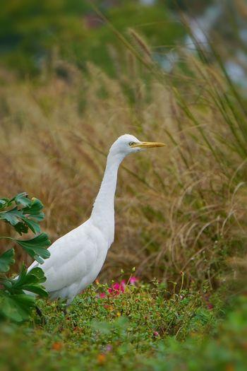 White bird on a field