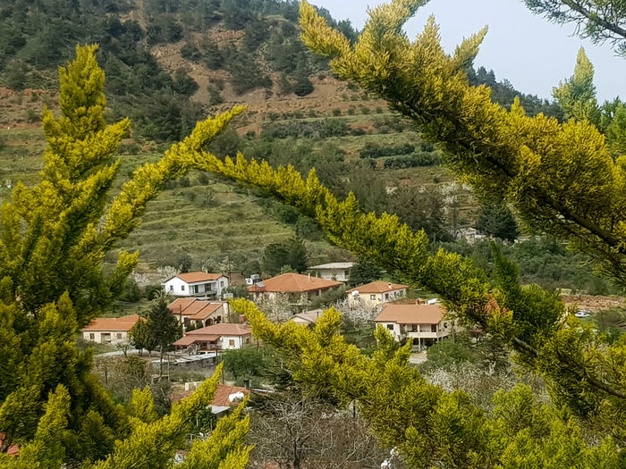 High angle view of trees and houses on mountain