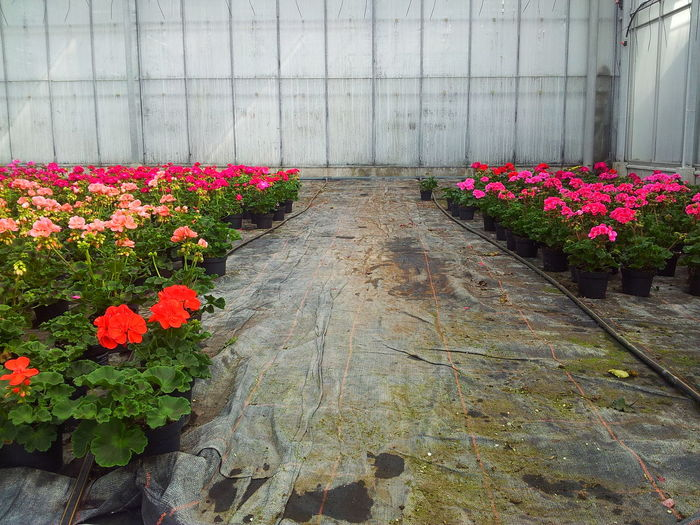 Beauty In Nature Blooming Day Flower Flower Head Fragility Freshness Greenhouse Growth Nature No People Outdoors Plant