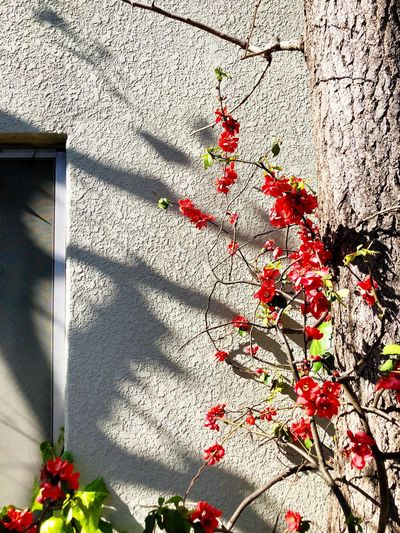 Red flowering plant against building wall