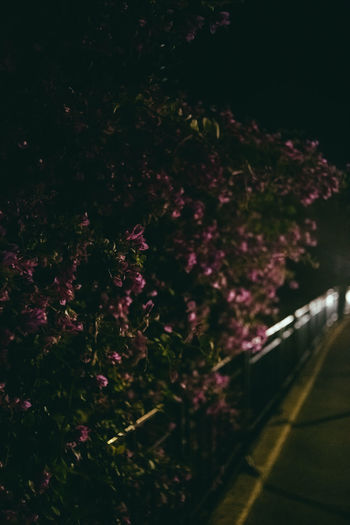 High angle view of pink flowering trees in city at night