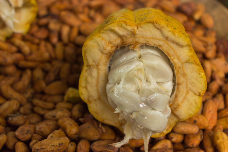 Cacao Beans Close-up Day Focus On Foreground Food And Drink Freshness Fruit Ingredient No People Spice