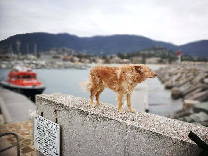View of a dog on the sea