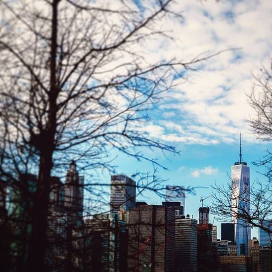 A beautiful view of the Freedom Tower (aka the One World Trade Center) through the cold winter trees of New York City. Freedom Freedomtower One WorldTradeCenter Remember 911 Winter Trees Newyorkcity New Citylife Skyline Cloudy Cold Newyork NewYear Building Blur Ztprod