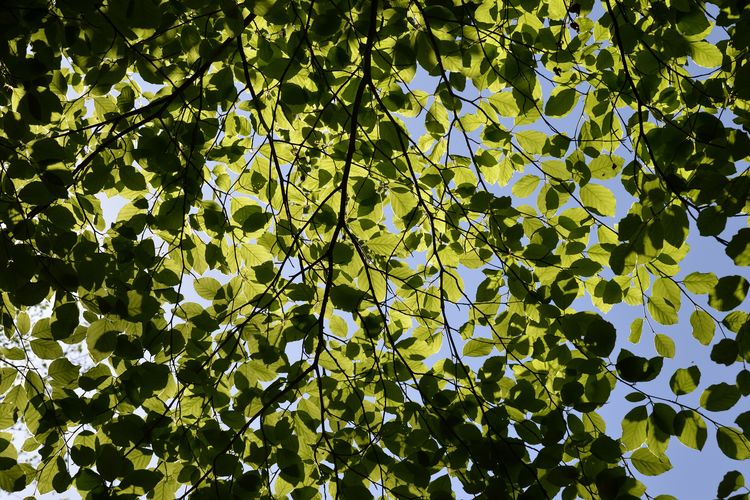 green leafes in