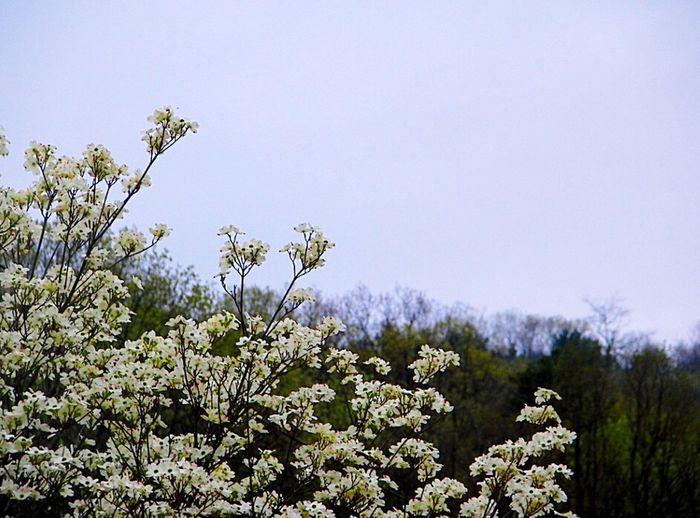 Flower White Whiteflower Naturelovers Photography Nature_collection Nature Nature Photography Perfectnature Beautiful Beauty In Nature Mountains