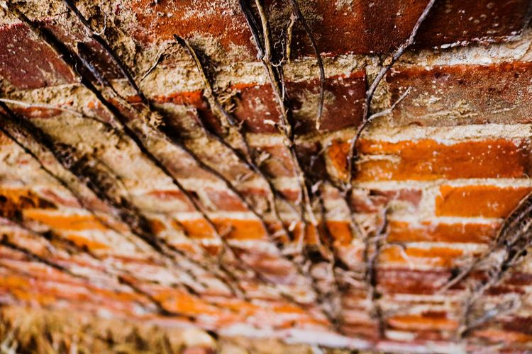 Brick Natures Diversities Nature Meets Urban Decaying Decayed Beauty Natural Beauty Decay Arcitecturephotography Nature_collection Backgrounds Full Frame Close-up Natural Pattern Leaf Vein Abstract Backgrounds Abstract